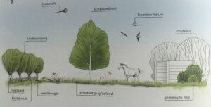 ontwerpen van een paddock paradise